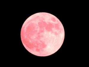 strawberrymoon4